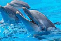 tini-excursions-dolphin2